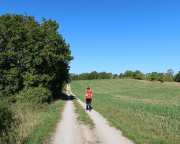 Wenig später aber das – weder Tauber noch Panorama - Feldweg