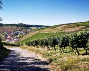 Blick auf Beckstein, herrlich inmitten von Weinbergen gelegen