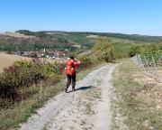 In den Weinbergen über Sachsenflur auf dem Weg nach Königshofen