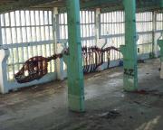 Dinosaurier im Lost Place Geocache Der Brief des Ministers