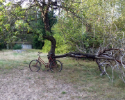 Stilleben im ehemaligen Ferienlager - immer wieder gibt es auf Lost Places skurile Momentaufnahmen.