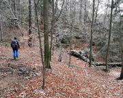 Das Bild zeigt es, über den Baumbruch führt der Pfad
