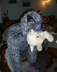 Armes Schäfchen, böser Wolf - netter Kletterer ;)
