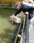 Fechi probiert seinen neuen bis 12m Tiefe wasserdichten Fotoapparat mit einem Videodreh beim Forellenfüttern in Rathen