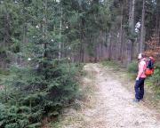 Beim Wechsel zum Rabentürmchen diese Entdeckung - da hat doch ein Scherkeks mitten im Nationalpark einen Baum geschmückt!