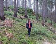 Nur zur Erinnerung - 3. Februar, auch wenn das Grün des Waldes für Frühling spricht!