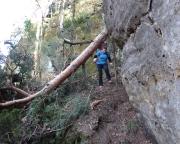 Die Krone des Baumes liegt im Tal, hier beim Abstieg durch die Schlucht südlich des Felsens