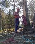 Hier noch besser zu erkennen – einer der Frühjahrsstürme hat den Baum abgeknickt