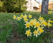 Frühlingsboten in Hinterhermsdorf