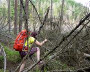 Dieses Bild sagt alles zum Zustand des Waldes im Großen Zschand