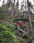 Beim Abstieg durch den toten Wald, oben der Bergfreundschaftsstein