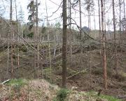 Waldsterben Bild 3 – Blick von der Zeughausstraße zum nun sichtbaren Frienstein