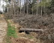 Waldsterben Bild 2 – Windbruch und sicherheitshalber gefällte Bäume am Reitsteig