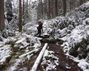 Vom Abzweig zum Taubenstein steigt man dann ca. 600 m auf schmalem, nicht zu steilen Pfad  ca. 80 hm zur Kirnitzsch ab