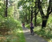 Schnell hat man Fürstenwalde passiert und findet sich in herrlichen Auenwäldern wieder