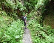 Nicht im Dschungel, sondern in den alten Steinbrücjen bei Jonsdorf