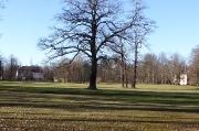 29 - Winterlicher BRanitzer Park - nun jha, hier am 16.02.2019 bei 14°C