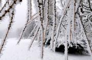 73 – Durch Raureif gebildete Eiskristalle an Bäumen im Isergebirge