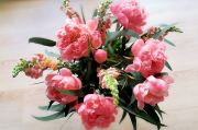 80 - Pfingstrosen, alle Jahre saisonal besonders schöne Blumen