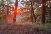 89 – Sonnenaufgang nahe der Hohen Sonne am Rennsteig