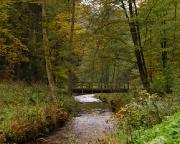 Bild 2 - Herbst im Kirnitzschtal
