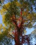 Bild 7 - Baum im Herbst – Lichtenhain