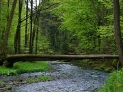 Elbsandsteingebirge im Mai_20